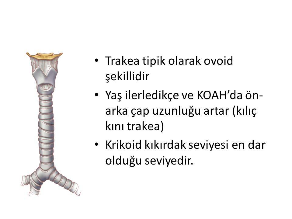 Trakea tipik olarak ovoid şekillidir