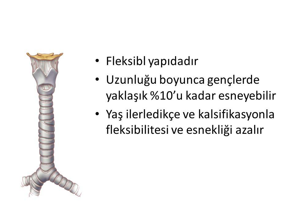 Fleksibl yapıdadır Uzunluğu boyunca gençlerde yaklaşık %10'u kadar esneyebilir.
