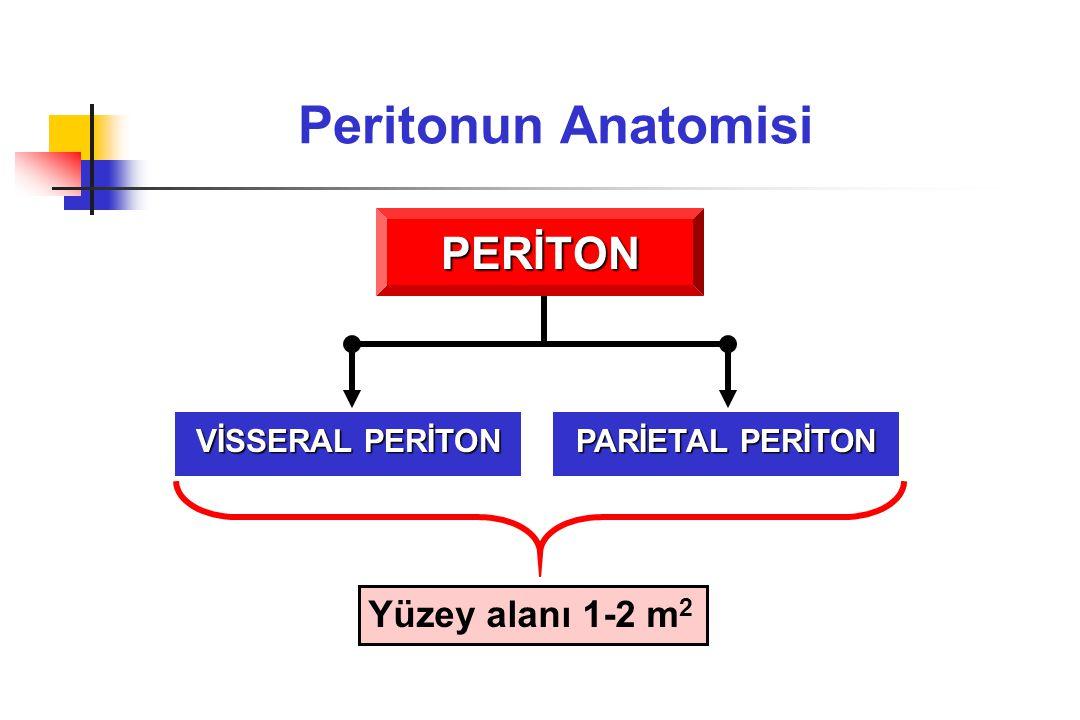 Peritonun Anatomisi PERİTON Yüzey alanı 1-2 m2 VİSSERAL PERİTON