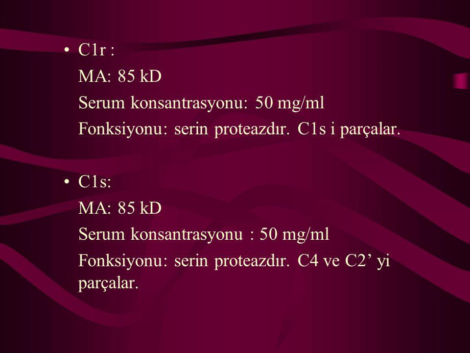 C1r : MA: 85 kD. Serum konsantrasyonu: 50 mg/ml. Fonksiyonu: serin proteazdır. C1s i parçalar. C1s: