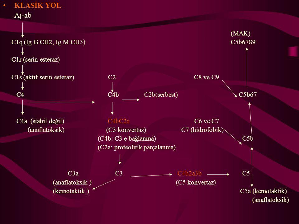 KLASİK YOL Aj-ab (MAK) C1q (Ig G CH2, Ig M CH3) C5b6789