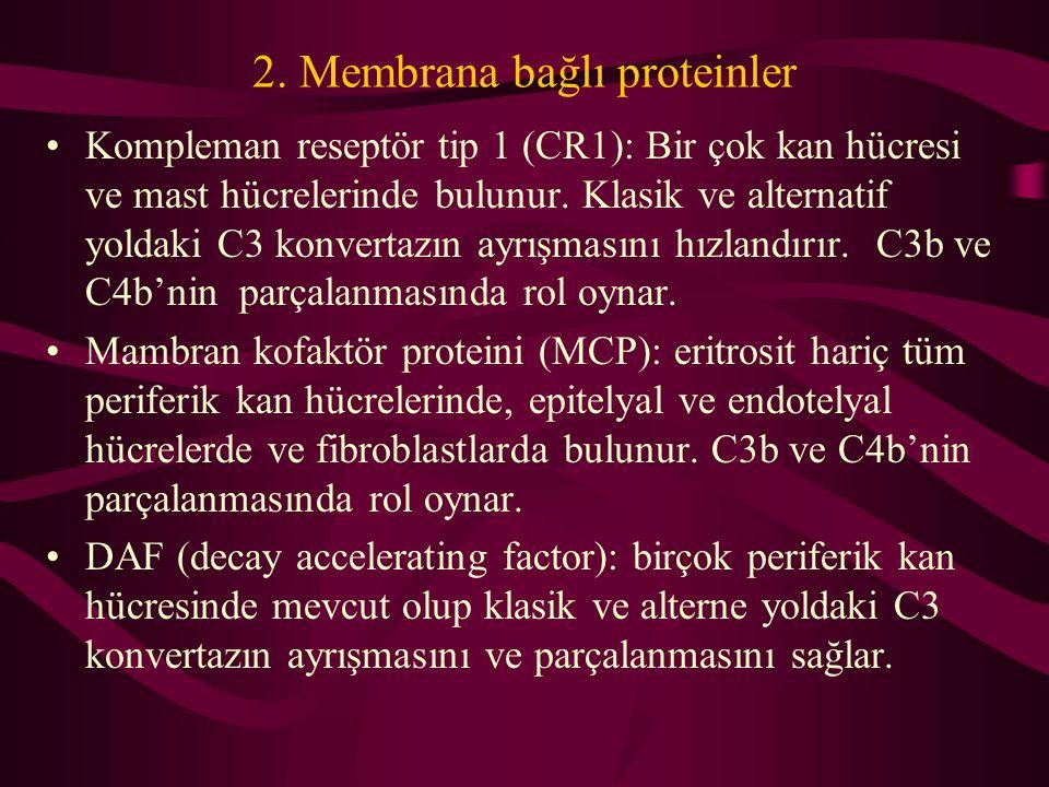 2. Membrana bağlı proteinler