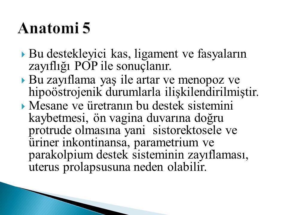 Anatomi 5 Bu destekleyici kas, ligament ve fasyaların zayıflığı POP ile sonuçlanır.