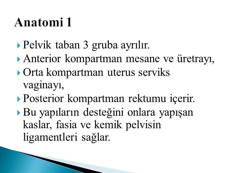Anatomi 1 Pelvik taban 3 gruba ayrılır.