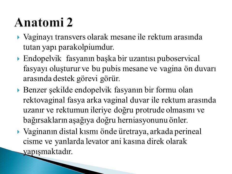 Anatomi 2 Vaginayı transvers olarak mesane ile rektum arasında tutan yapı parakolpiumdur.