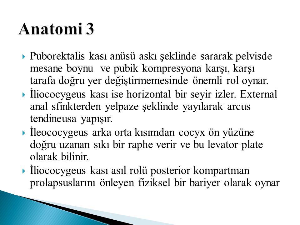 Anatomi 3