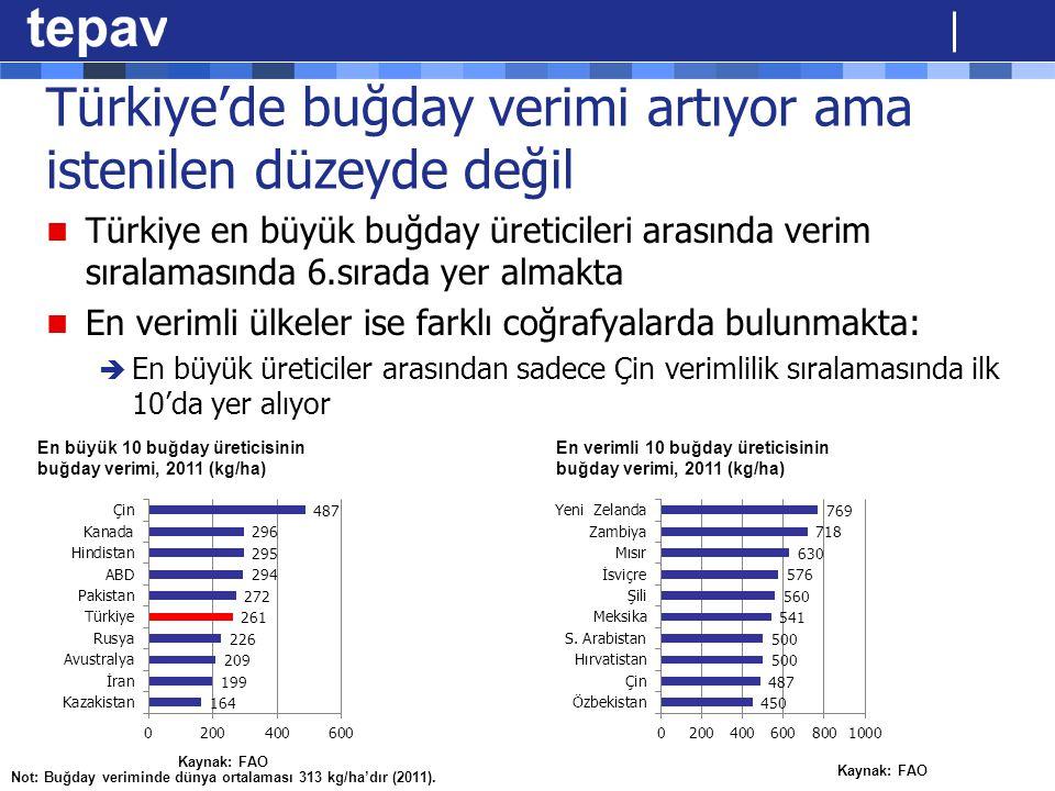 Türkiye'de buğday verimi artıyor ama istenilen düzeyde değil