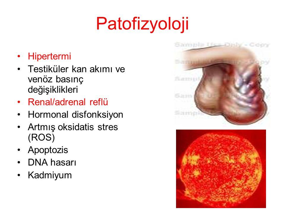 Patofizyoloji Hipertermi