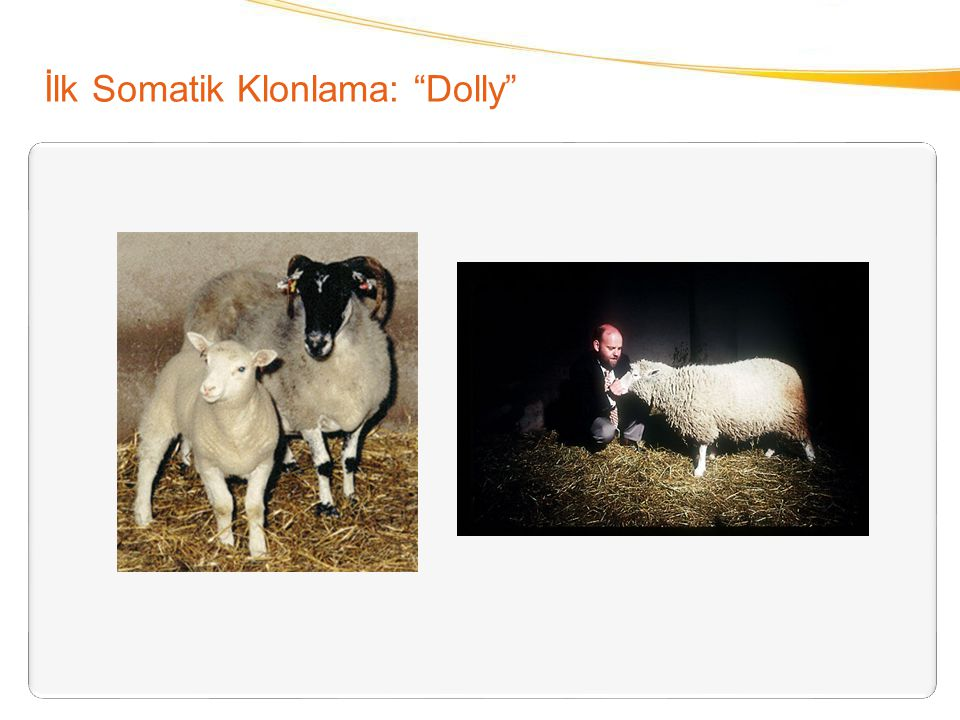 İlk Somatik Klonlama: Dolly
