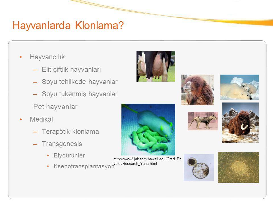 Hayvanlarda Klonlama Pet hayvanlar Hayvancılık