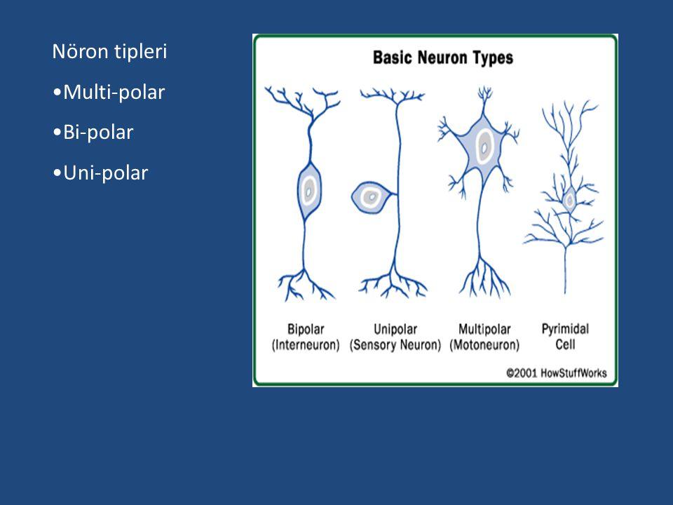 Nöron tipleri Multi-polar Bi-polar Uni-polar