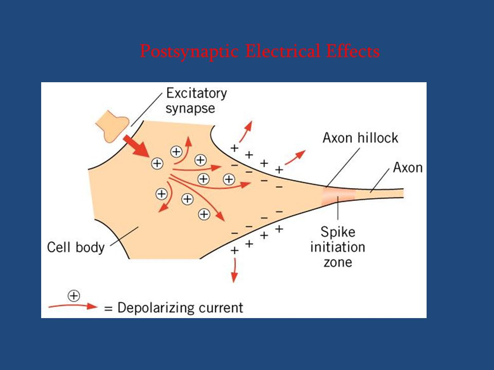 Postsynaptic Electrical Effects