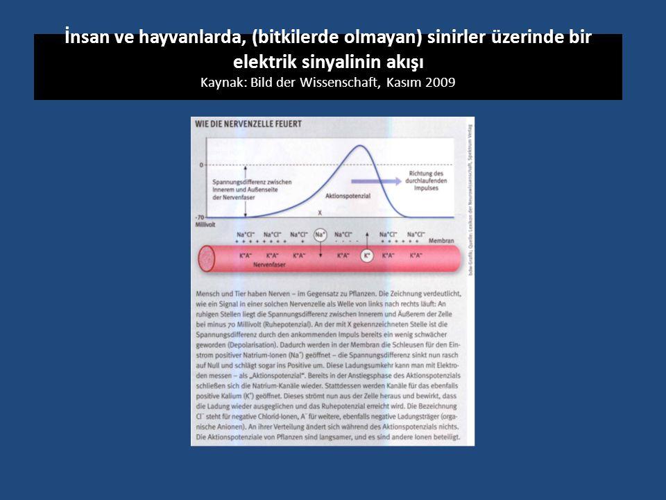 İnsan ve hayvanlarda, (bitkilerde olmayan) sinirler üzerinde bir elektrik sinyalinin akışı Kaynak: Bild der Wissenschaft, Kasım 2009