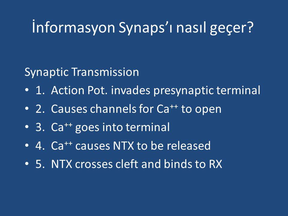 İnformasyon Synaps'ı nasıl geçer