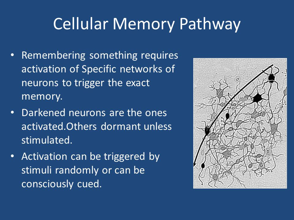 Cellular Memory Pathway