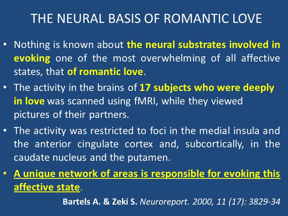 THE NEURAL BASIS OF ROMANTIC LOVE