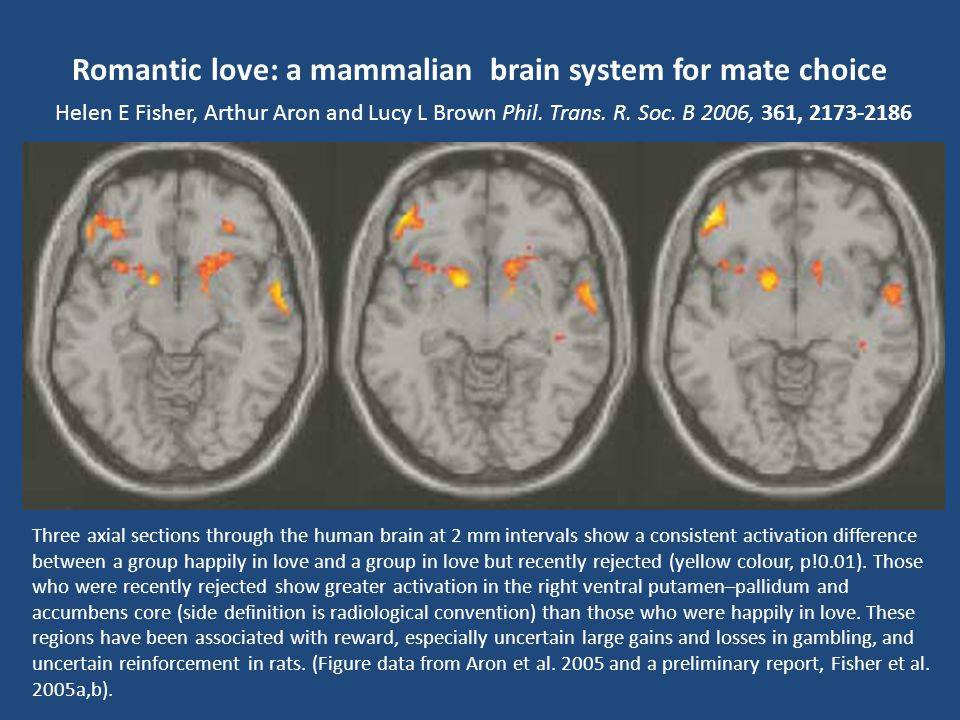 Romantic love: a mammalian brain system for mate choice Helen E Fisher, Arthur Aron and Lucy L Brown Phil. Trans. R. Soc. B 2006, 361,