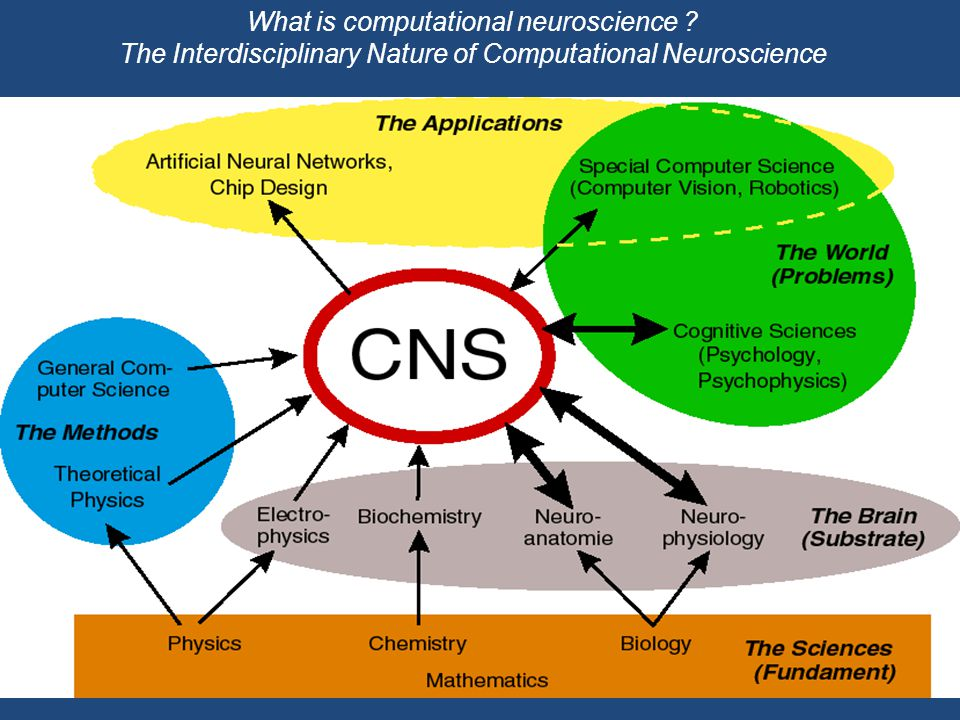 What is computational neuroscience