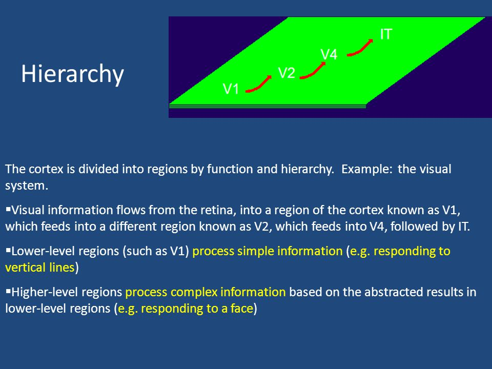 Hierarchy The cortex is divided into regions by function and hierarchy. Example: the visual system.