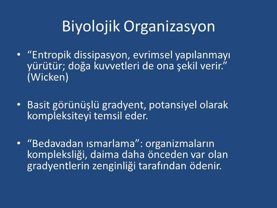 Biyolojik Organizasyon