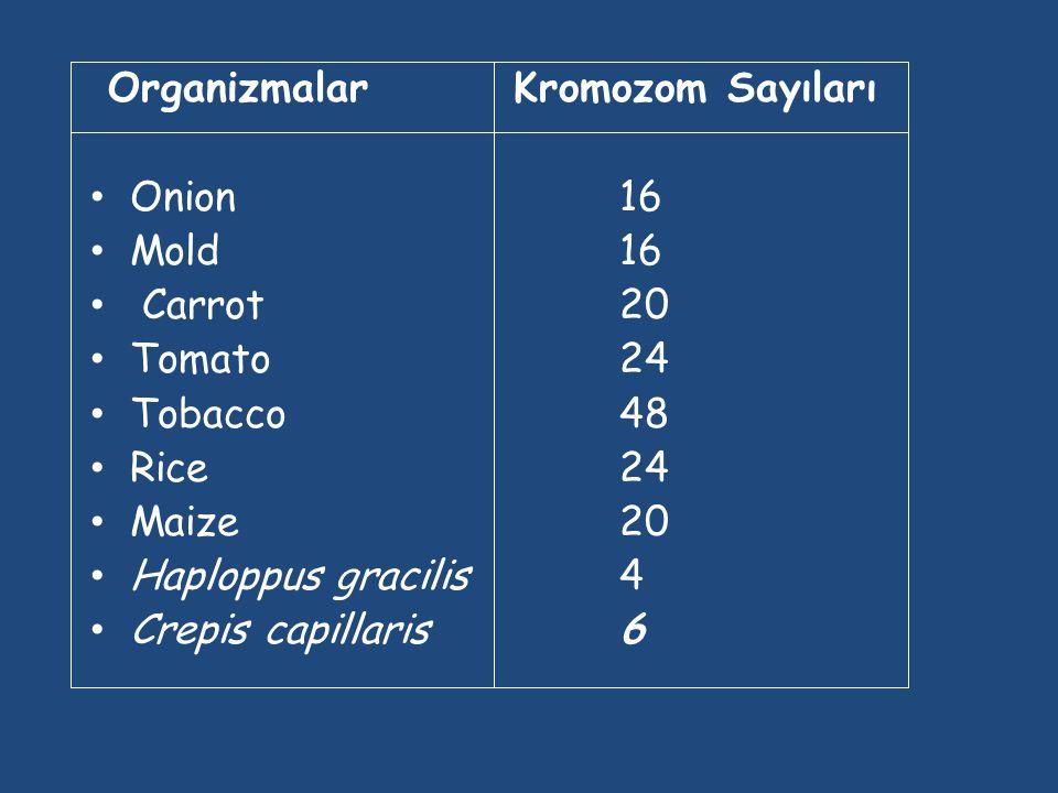 Organizmalar Kromozom Sayıları