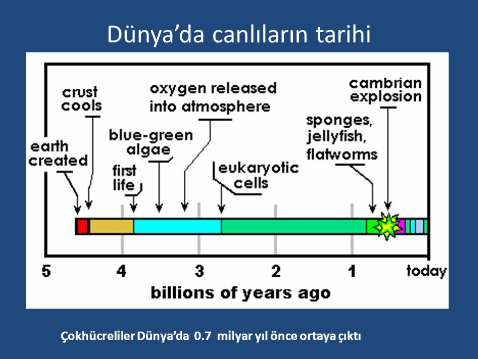 Dünya'da canlıların tarihi