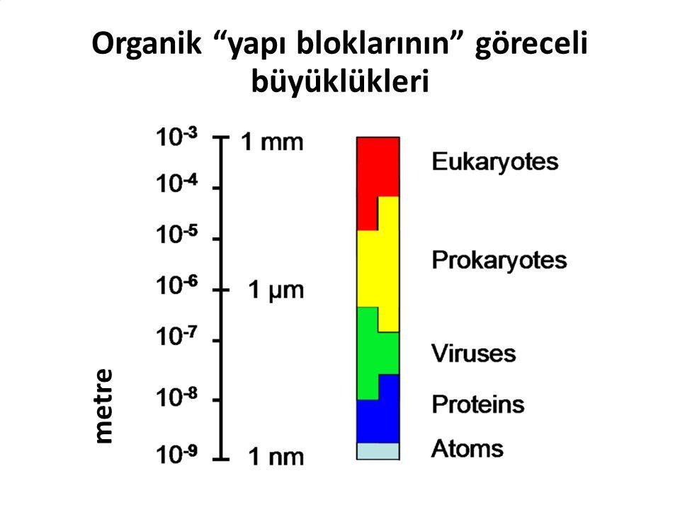 Organik yapı bloklarının göreceli büyüklükleri