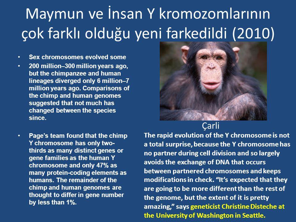 Maymun ve İnsan Y kromozomlarının çok farklı olduğu yeni farkedildi (2010)