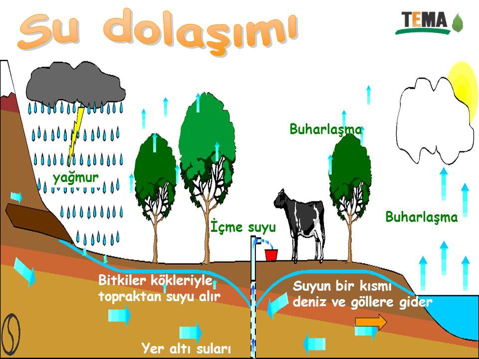 Su dolaşımı Buharlaşma yağmur Buharlaşma İçme suyu Bitkiler kökleriyle