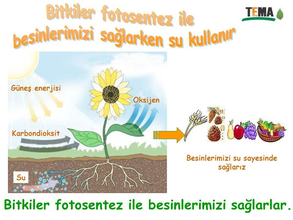Bitkiler fotosentez ile besinlerimizi sağlarken su kullanır