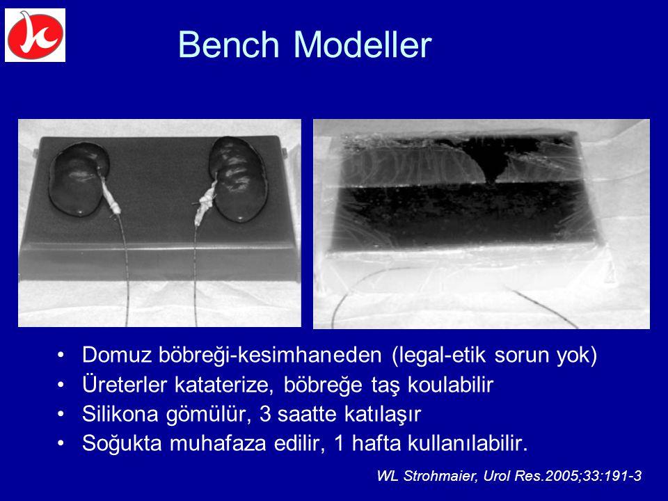 Bench Modeller Domuz böbreği-kesimhaneden (legal-etik sorun yok)