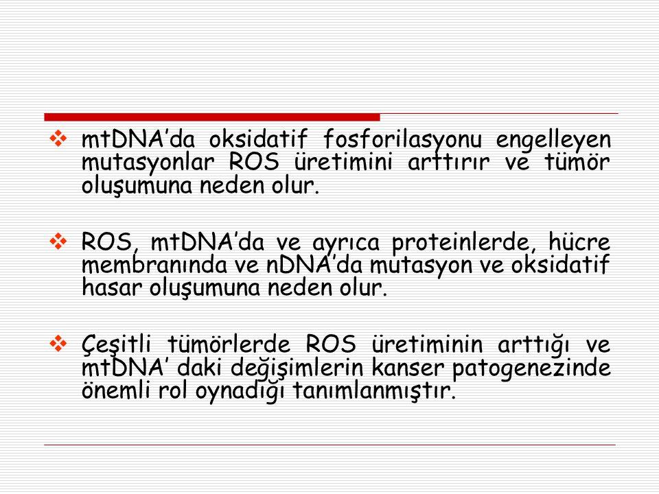 mtDNA'da oksidatif fosforilasyonu engelleyen mutasyonlar ROS üretimini arttırır ve tümör oluşumuna neden olur.