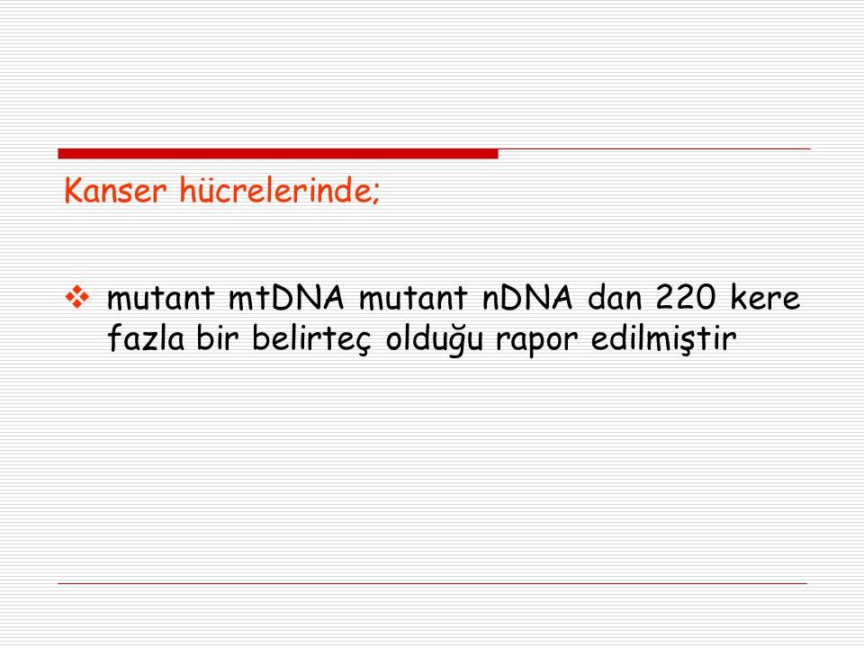 Kanser hücrelerinde; mutant mtDNA mutant nDNA dan 220 kere fazla bir belirteç olduğu rapor edilmiştir.