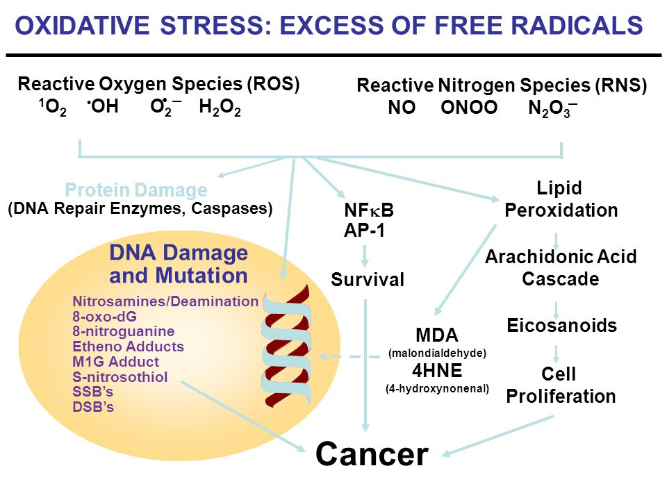 Cancer OXIDATIVE STRESS: EXCESS OF FREE RADICALS DNA Damage