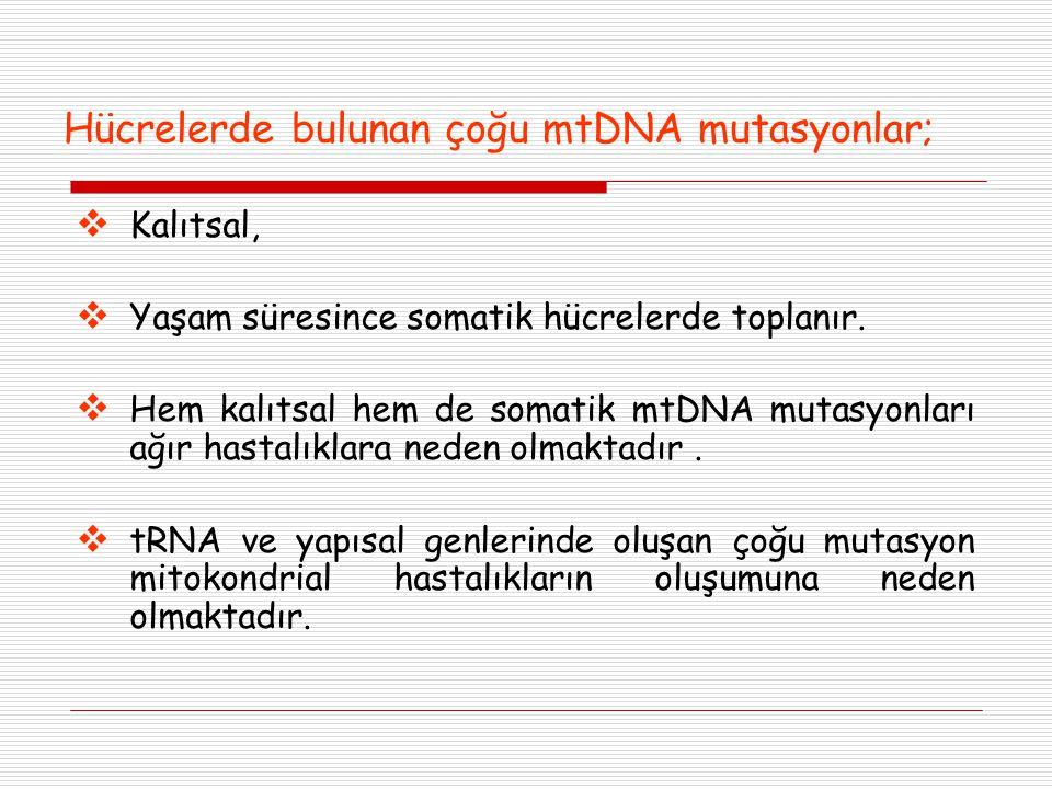 Hücrelerde bulunan çoğu mtDNA mutasyonlar;