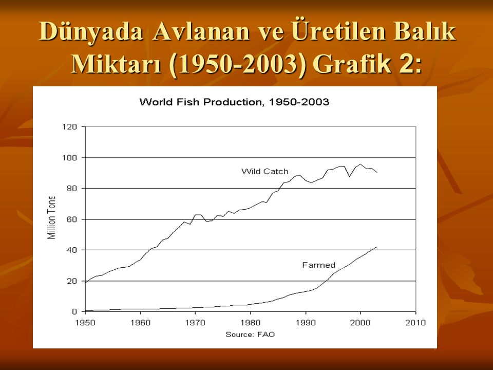 Dünyada Avlanan ve Üretilen Balık Miktarı (1950-2003) Grafik 2: