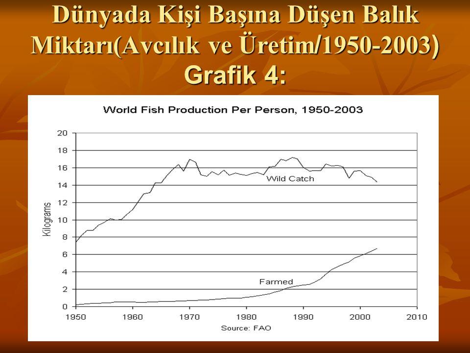 Dünyada Kişi Başına Düşen Balık Miktarı(Avcılık ve Üretim/1950-2003) Grafik 4: