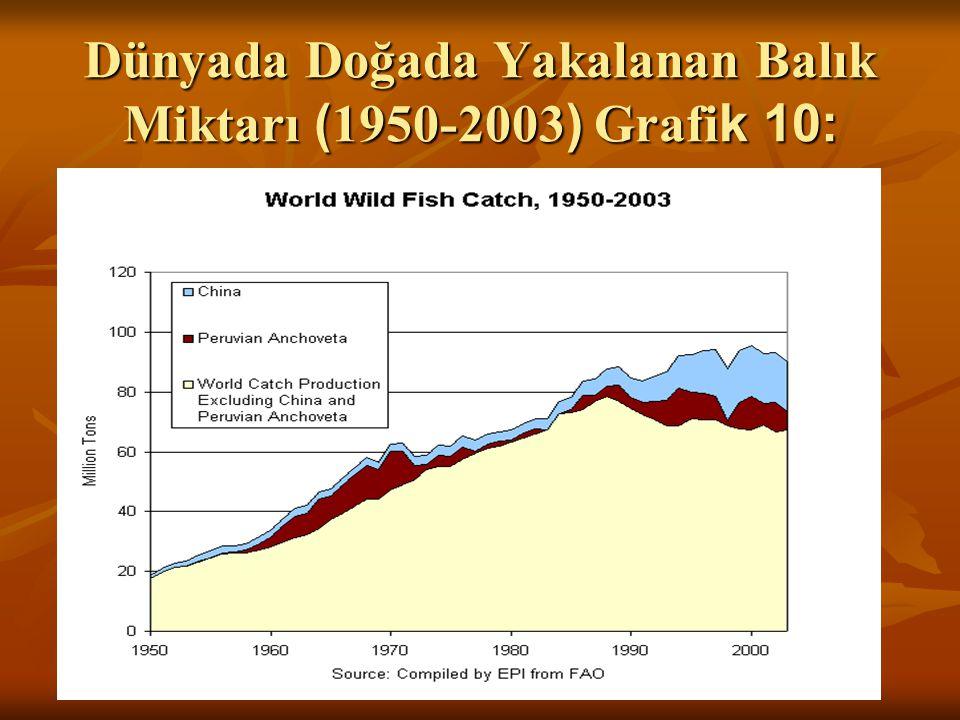 Dünyada Doğada Yakalanan Balık Miktarı (1950-2003) Grafik 10:
