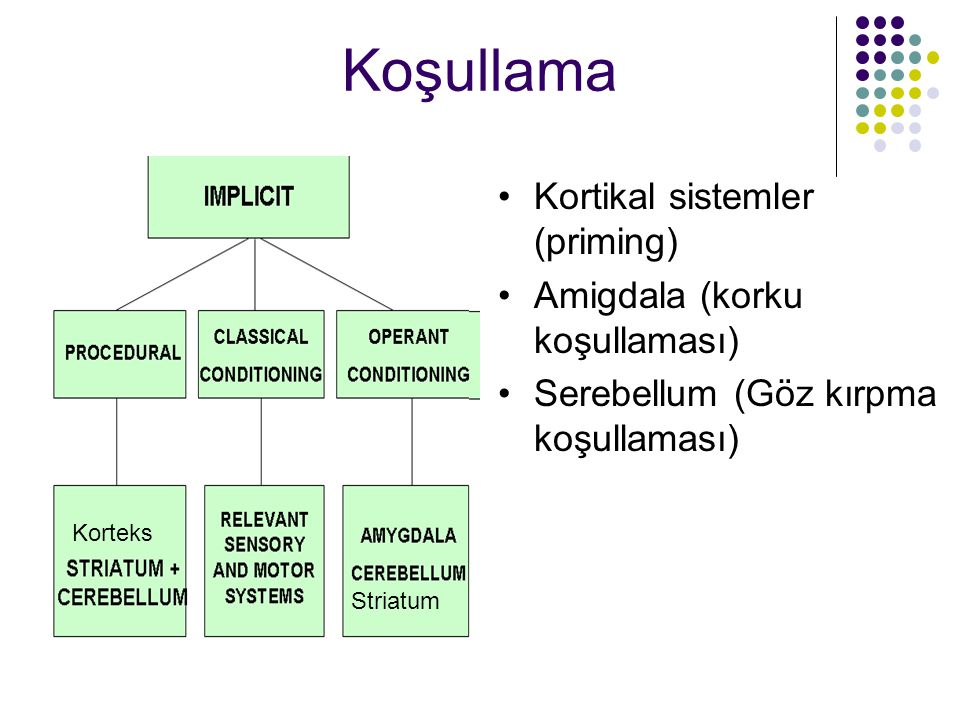 Koşullama Kortikal sistemler (priming) Amigdala (korku koşullaması)