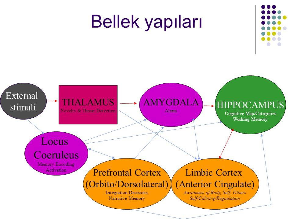 Bellek yapıları Locus Coeruleus HIPPOCAMPUS External stimuli AMYGDALA