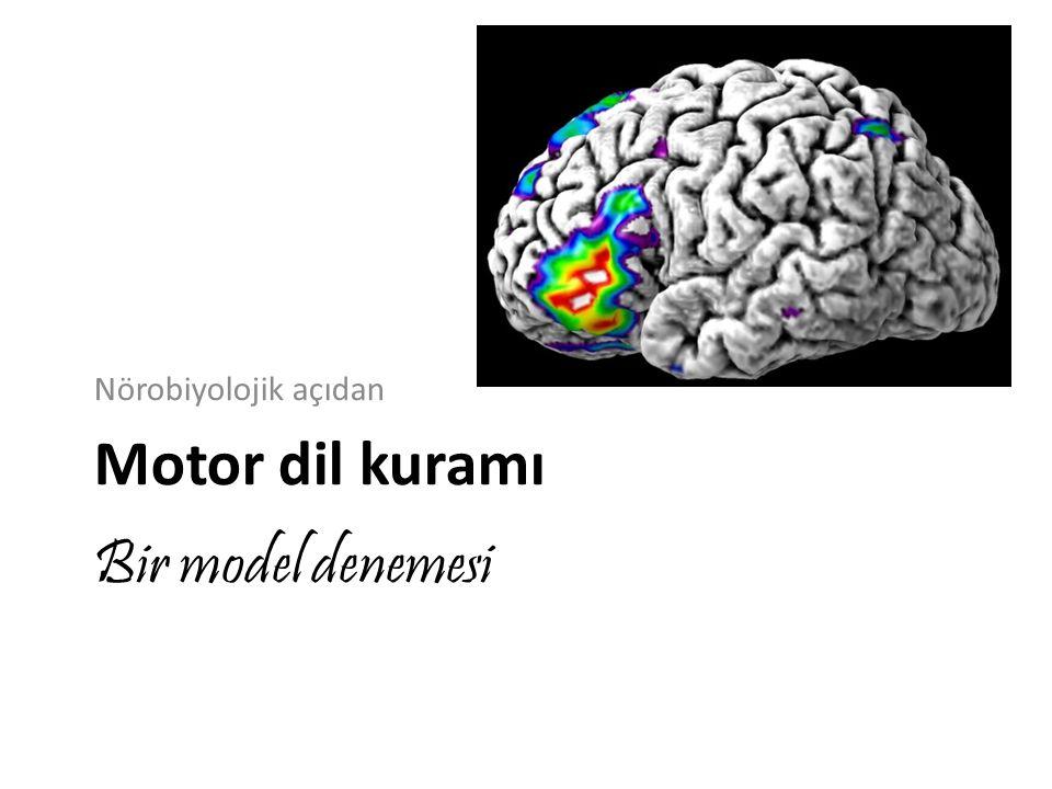 Nörobiyolojik açıdan Motor dil kuramı Bir model denemesi