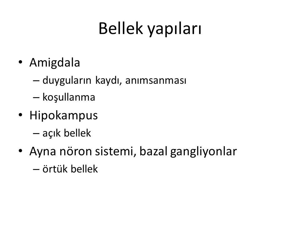 Bellek yapıları Amigdala Hipokampus