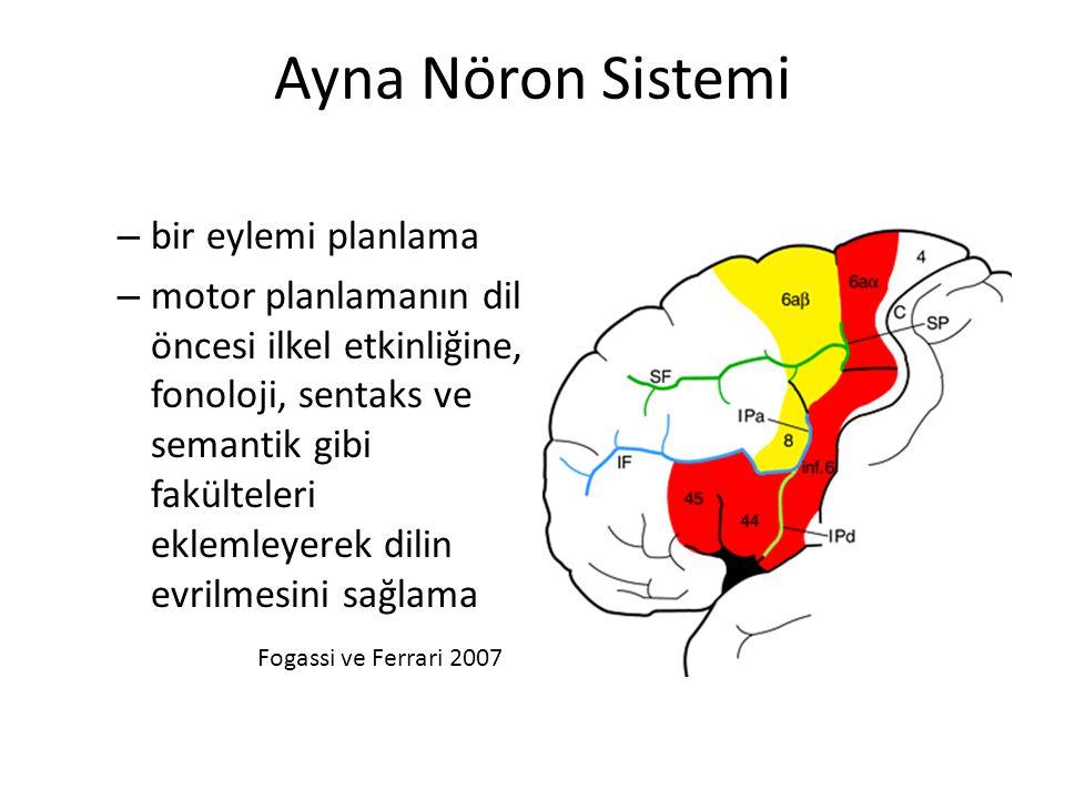 Ayna Nöron Sistemi bir eylemi planlama