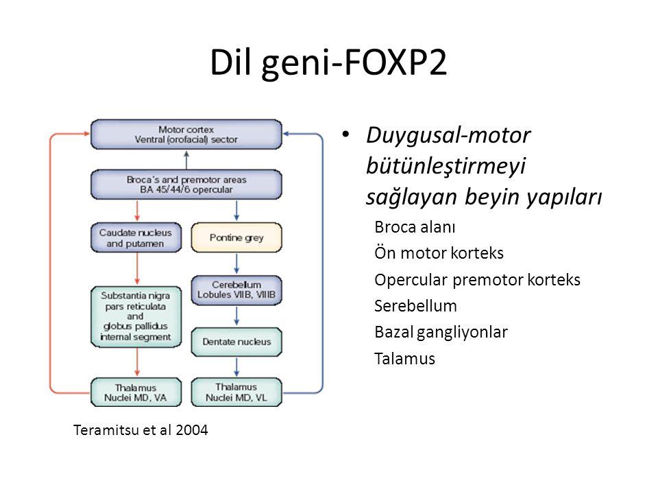 Dil geni-FOXP2 Duygusal-motor bütünleştirmeyi sağlayan beyin yapıları