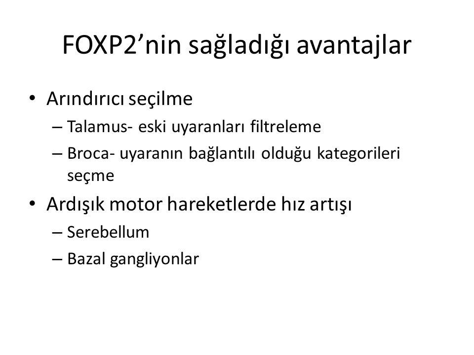 FOXP2'nin sağladığı avantajlar