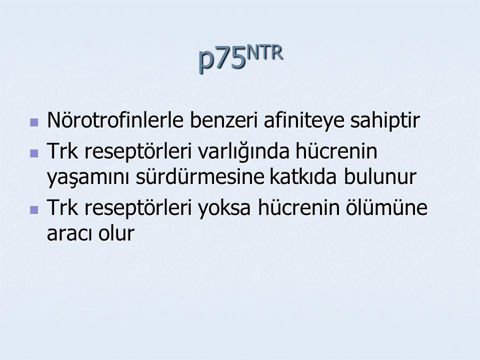 p75NTR Nörotrofinlerle benzeri afiniteye sahiptir