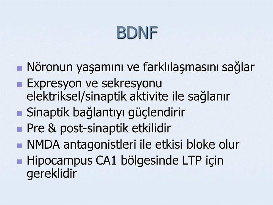 BDNF Nöronun yaşamını ve farklılaşmasını sağlar