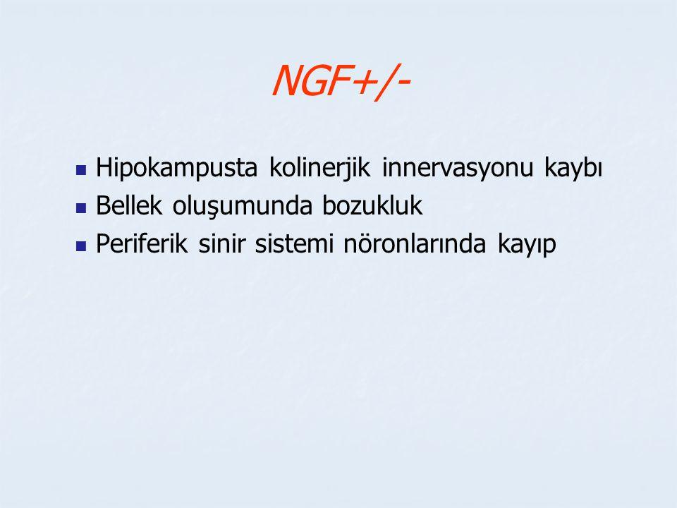 NGF+/- Hipokampusta kolinerjik innervasyonu kaybı