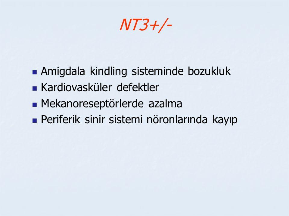 NT3+/- Amigdala kindling sisteminde bozukluk Kardiovasküler defektler