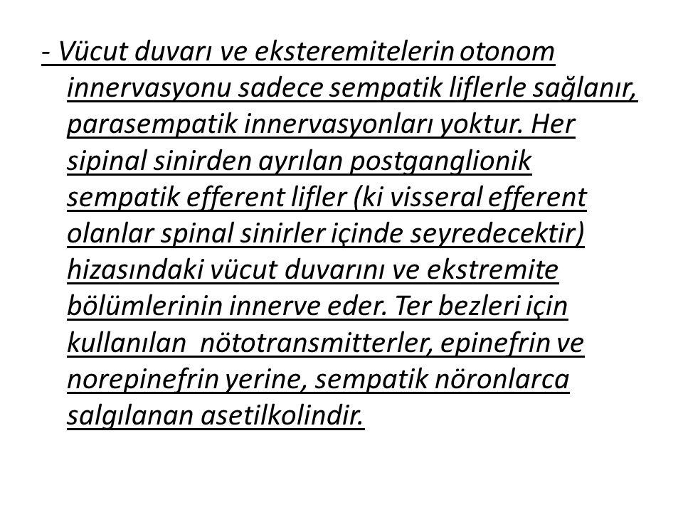- Vücut duvarı ve eksteremitelerin otonom innervasyonu sadece sempatik liflerle sağlanır, parasempatik innervasyonları yoktur.
